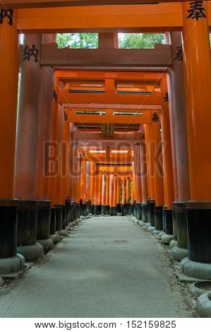 Kyoto Japan - September 17 2016: Thousands of Torii create path up the hill at Fushimi Inari Taisha Shinto Shrine. Look through multiple of these vermilion Torii.