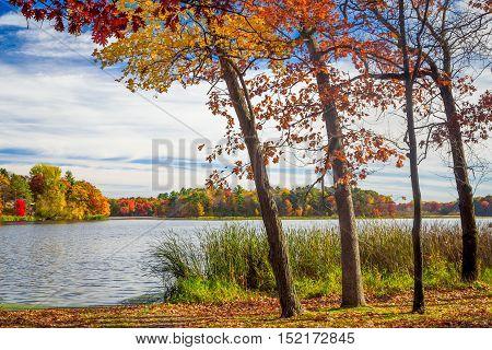 Autumn Vibrant Colors Of Oak Tress Along The Apple River