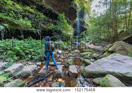 Rainforest wilderness area with waterfall creek and woman hiking. Motion blur. Grand Canyon Walking Track Blue Mountains National Park NSW Australia