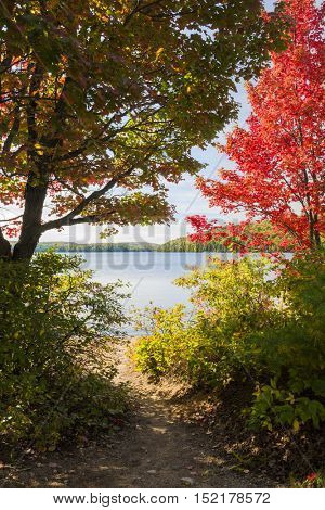 Fall forest trees with colorful autumn foliage framing a path to calm blue lake in Algonquin Provincial Park, Canada