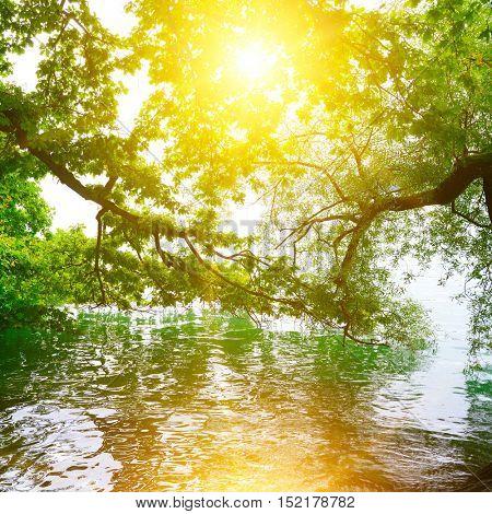 Bright sunrise on shore of picturesque lake