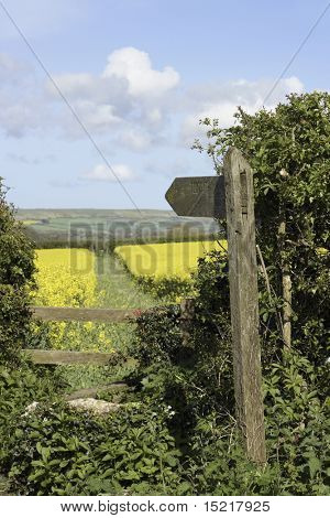 Wooden public footpath signpost into a field full of bright yellow rapeseed or canola.
