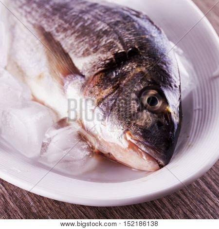 Fish Over White Plate