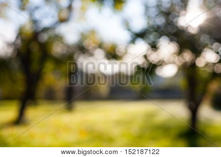 Defocused blurry bokeh apple tree garden background with green grass on a sunny day