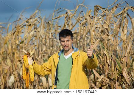 Farmer With Corncobs In Field