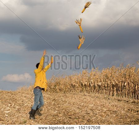 Excited Farmer In Corn Field