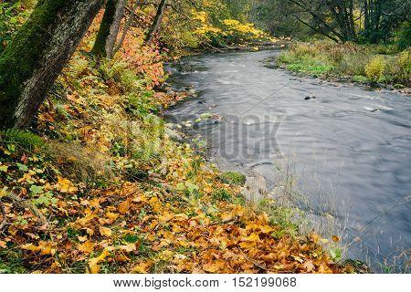 Autumn-time vivid river bank long exposure image