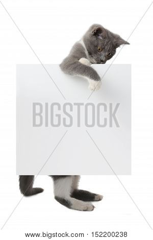 beautiful cat lying on a white background with an leaf