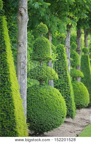 tree path of Versailles garden Paris France