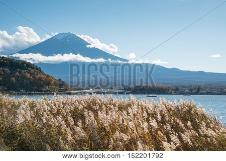 Beautiful view of Mount Fuji and field at Lake Kawaguchi in autumn season This mountain is a famous natural landmark and iconic of Japan