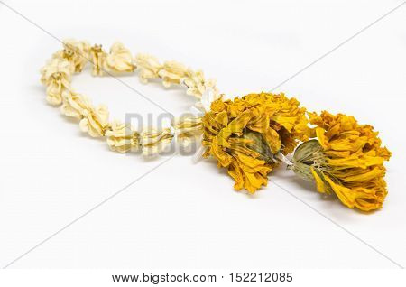 Jasmine garland flower isolead on white background