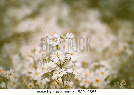 Beautiful white flower. White flower. Garden flowers