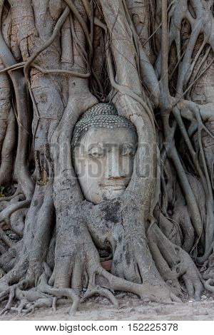 Ancient buddha head embeded in banyan tree from Ayutthaya, Thailand.