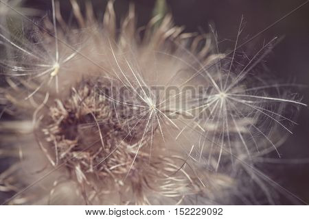 Withered Bush Weed