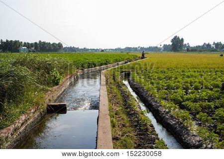 water stream in between the green growing crop field