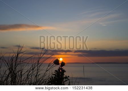 beautiful orange sunset over loop head with silhouetted wild tall thistles on the wild atlantic way in ireland