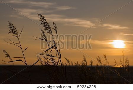 spica and sunset,the picture was taken in Russia