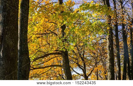part tree branches with yellow autumn leaves in the background landscape of nature, october, sunny evening, with colorful leaves on a branch, beautiful, sunny, autumn, october, yellow, brown, bright,