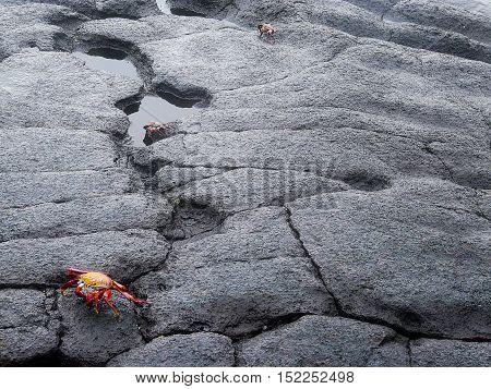 Lava landscape on the Galapagos islands of Ecuador
