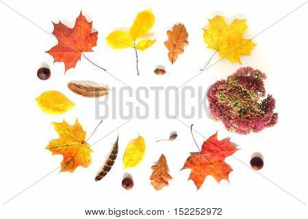 Composition with flowers, feathers, chestnuts and autumn leaves. Top view on white background. Autumn flat lay. Frame for art work.