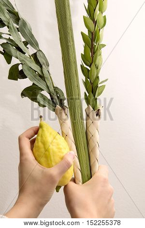 Lulav bunch of branches green branches yellow etrog in hand