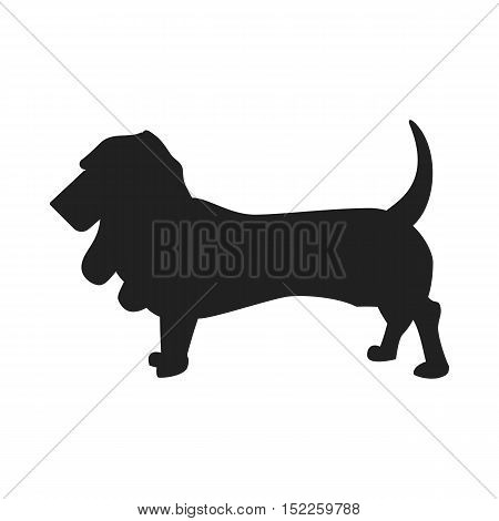Vintage vector image of a black silhouette of a thoroughbred Basset Hound dog standing straight isolated on white background looking like a shadow of the image.