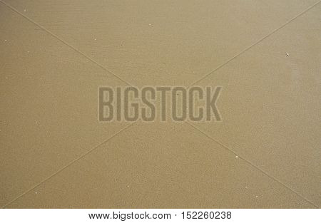 Sea sand background. Close up texture with wet sand
