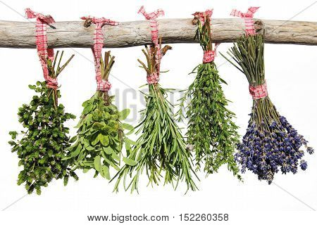 Herbs hanging on a wooden branch against a white background