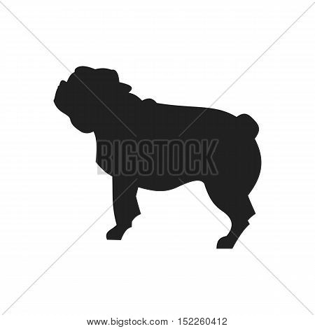 Vintage vector image of a black silhouette of a thoroughbred Pug Dog standing straight isolated on white background looking like a shadow of the image.