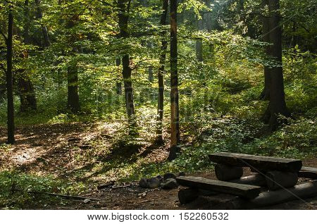 Forest rest area for tourists with wooden table, benches and stone open fireplace in autumn