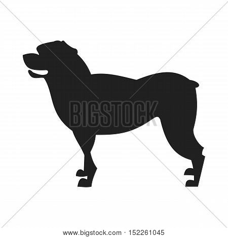 Vintage vector image of a black silhouette of a thoroughbred Rottweiler dog standing straight isolated on white background looking like a shadow of the image.