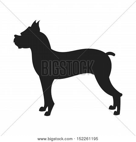 Vintage vector image of a black silhouette of a thoroughbred Boxer Dog standing straight isolated on white background looking like a shadow of the image.