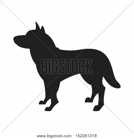 Vintage vector image of a black silhouette of a thoroughbred Siberian Husky dog standing straight isolated on white background looking like a shadow of the image.