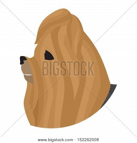 Pedigree dog head yorkshire terrier. Pet companion isolated on white background. Vector illustration