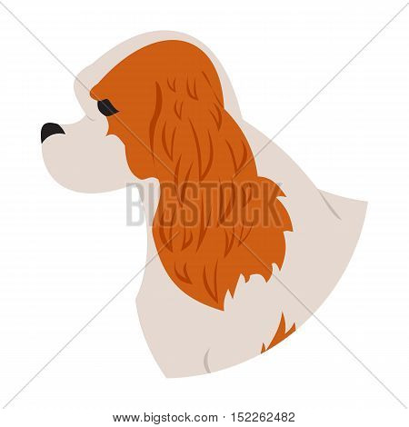 Dog head cavalier charles king spaniel isolated on white background. Vector illustration