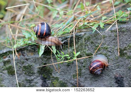 two snails on a stone covered with moss