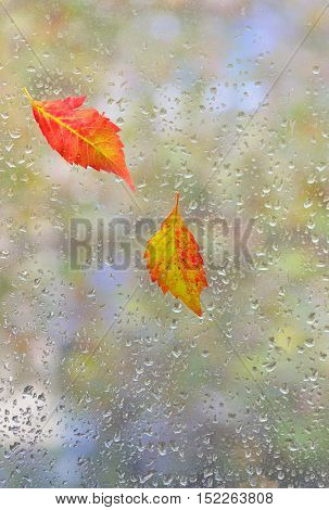 autumn  leaves on glass with natural water drops