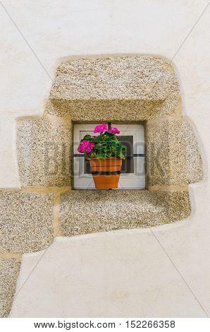 Pink geranium in a flowerpot placed in a window