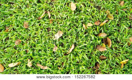 Fallen dry leaves on fresh green grass in nature park outdoor in autumn.
