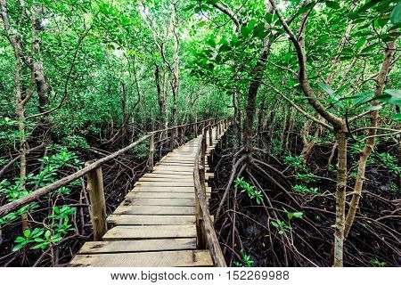 beautiful view of wooden walkway in african green rainforest