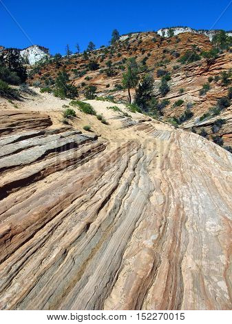 Zion Park, Utah, is famous for its deep canyons carved by the river Virgin there are several million years. The striations in the rock visible in this photo were left by the natural erosion.