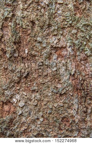 Old Wood Tree Bark Texture Background Pattern