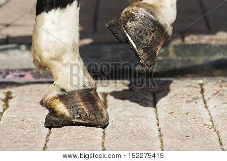Horse's hooves are shown on the cobbled road