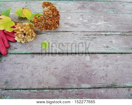 Arrangement of dried flowers with leaves on old wooden boards background with free space -place for photo and text. Autumn still life with hydrangea hortensia and gloves on vintage wooden texture.