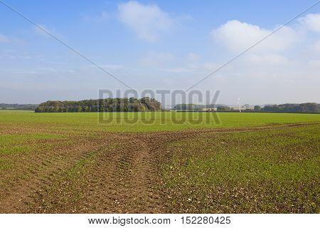 Green Wheat Field Near Woodland