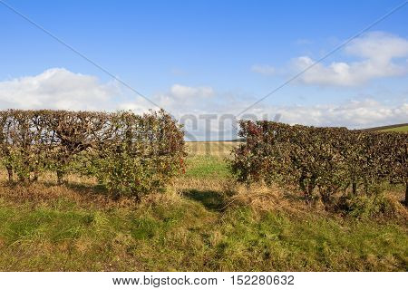 Hedgerow With A Gap