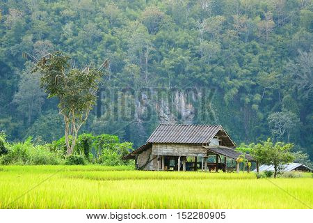 farmer's cottage Located in the middle of the field against a background of green mountains.