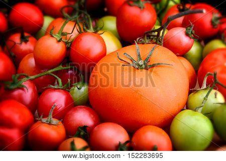 Super Fresh Colorful Tomato