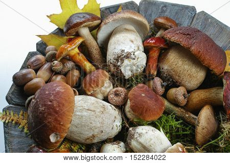 Mix of fresh wild mushrooms (boletus edulis) on wooden plate