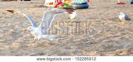 White Seagull At The Beach